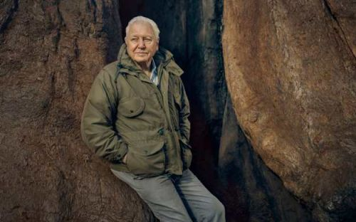 Sir David Attenborough's new Green Planet series will use robots to tell 'emotional stories' about plants