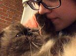 Get out of my face! Cat repeatedly pushes her owner away as she tries to kiss it in hilarious video