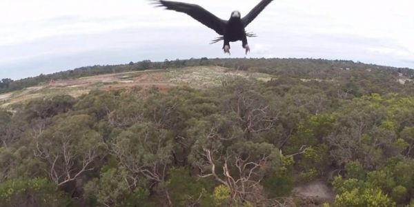 Best drone takedown videos: Eagle attack, shotgun blast, fishing hook and more