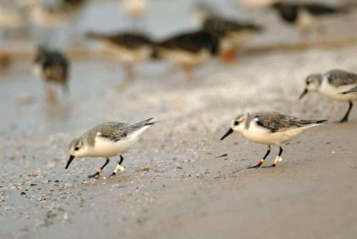 Migratory birds are worse off in West Africa