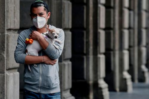 Pets may need to be vaccinated to stop Covid-19 spread, scientists suggest