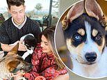 Nick Jonas and Priyanka Chopra show off their adorable new rescue puppy Panda