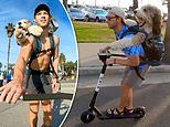 Man captures hearts with videos of him rollerblading with his 75LB dog strapped to his back