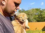 Faithful German Shepherd steps in to raise two lion cubs