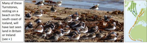 Which wader, when and why?