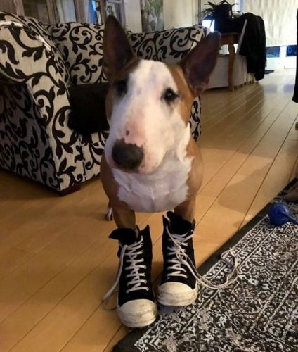 There's an Instagram dedicated to dogs wearing Rick Owens