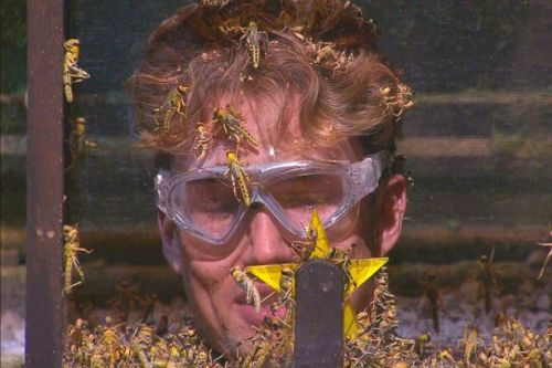 I'm A Celebrity pressured to ban animals in trials after 11,000 Ofcom complaints