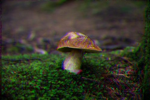 One dose of magic mushrooms can reduce depression for years, says study