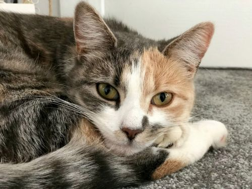 Missing cat found 30 miles away after owners see CCTV of it climbing into back of a TV repair van