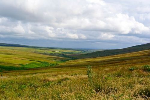 Langholm Initiative makes key appointments for Tarras Valley Nature Reserve