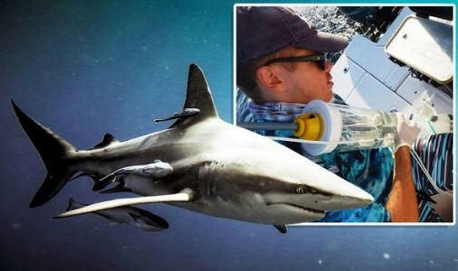Shark bombshell: Novel study exposes shark populations with as little as a bottle of water