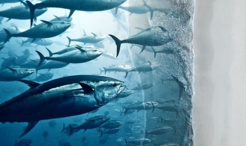Fish EXTINCTION: Climate change could endanger 'significant proportion' of fish species