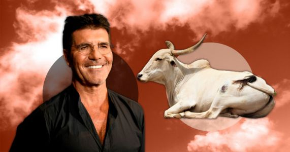 Indian bull renamed after Simon Cowell after suffering back injury