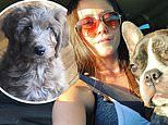 Jenelle Evans announces new pet dog less after David Eason shot and killed their canine Nugget