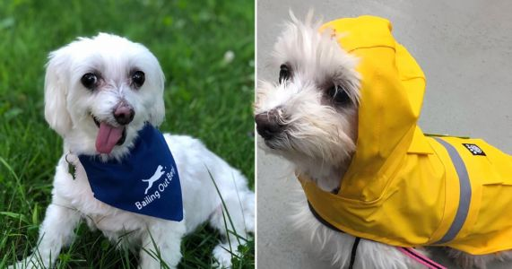 Puppy mill survivor who suffered debilitating anxiety crowned World's Cutest Rescue Dog