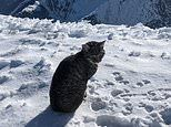 Confused moggy follows hikers to the top of a 3,000m Swiss mountain