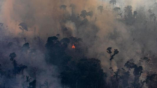The Amazon Is Screwed Under Brazil's President, New Data Confirms