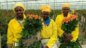 As Covid-19 devastates the global flower trade, we speak to a British florist and the Kenyan flower farmer thousands of miles away who supplies her to find out how their lives have been impacted