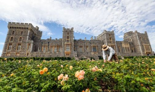 Windsor Castle opens terrace garden to public for first time since 1970s