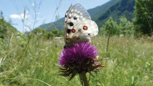 Butterfly data can inform Europe's environmental policy