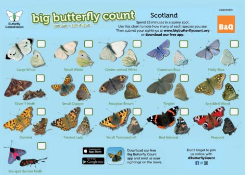 Experts say Scotland could be witnessing 'once-in-a-decade butterfly phenomenon'