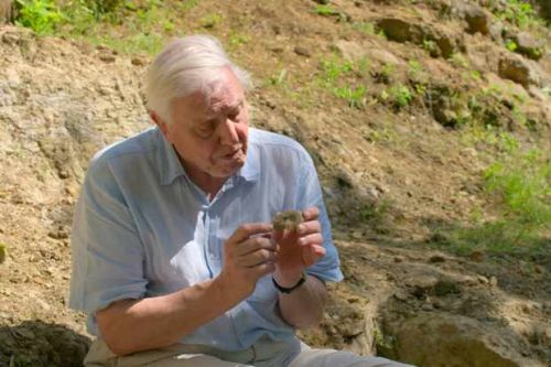 David Attenborough delivers poignant mission statement in powerful Netflix doc A Life on Our Planet