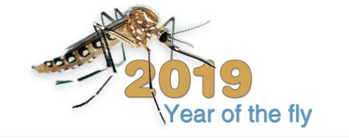 The year of the fly - Exploring the families of British Diptera