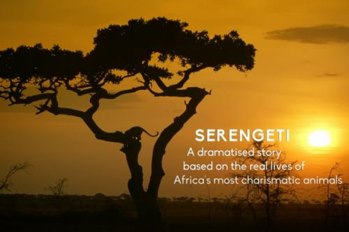 How to watch Serengeti - what's it about and who's the narrator?