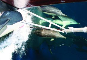 Sailors urged to report incidents of marine wildlife harassment