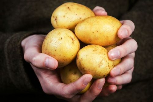 How to store potatoes in a way that will make them last for months