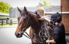 What does it take to get a horse to Royal Ascot?