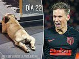 Marcos Llorente names his dog Anfield a month after Atletico Madrid star's Champions League heroics