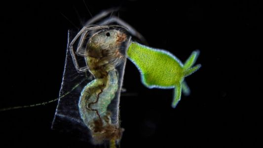 Nikon Small World microscopy contest 2021: A few of our favorites