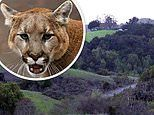 Hero saves six-year-old girl being attacked by mountain lion by punching 160-pound cat in the ribs