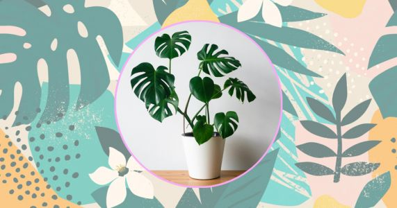 How to help your houseplants survive and thrive in the hot weather