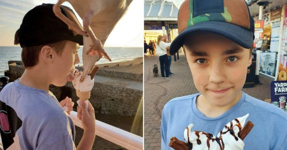Boy doesn't notice seagull swooping down to take bite of his ice cream