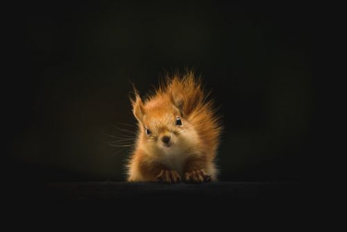 Best Squirrel Deals: A new site that helps you save money on the best shopping deals
