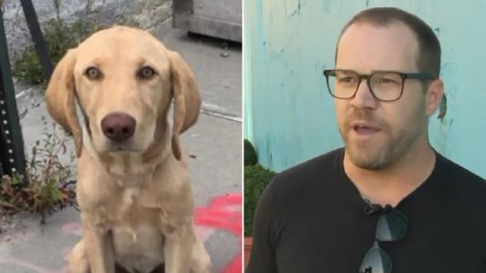 Moaning know-it-alls attack animal lover for fundraising to save sick Labrador he rescued off street
