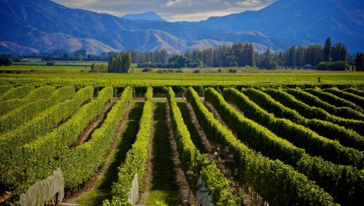 Raise a glass to these holiday destinations: Wine regions to visit in the future based on our top lockdown tipples