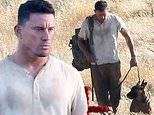 Channing Tatum gets to work on the set of Dog after splitting from singer Jessie J yet again