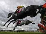 Robin Goodfellow's Racing Tips: Best bets for Tuesday, October 27
