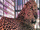 Leopard decapitates baby after snatching him from cot in India