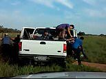 Twenty migrants run from cops in a failed smuggling attempt 70 miles from the Texas-Mexico border