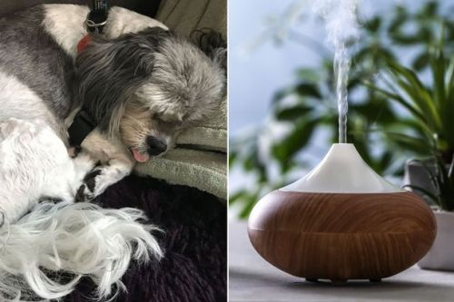 Dog owner's urgent warning after pet is 'poisoned' by common household item