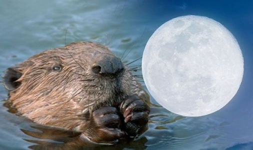 Full Moon meaning: What is the meaning behind the Beaver Moon's name?