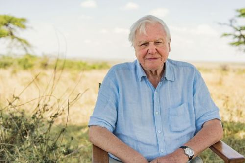 David Attenborough joins Instagram at 94 and calls on fans to save the planet