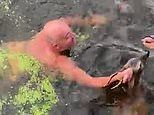 Moment 'hero' father plunges into murky canal to rescue a baby deer from drowning