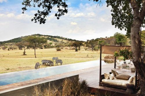 Inside the £166,736 safari holiday where you can watch animals from the pool